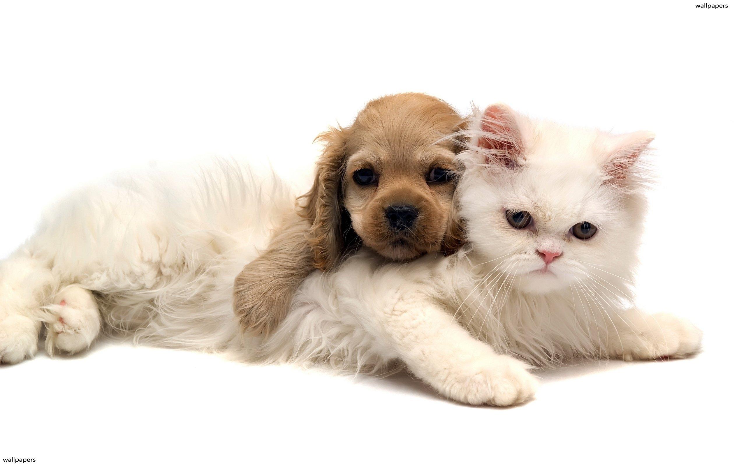 Advantages of RSPCA Pet Insurance