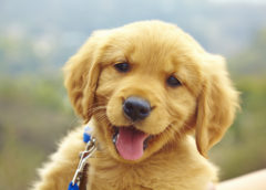 Pet Insurance coverage and Harmful Canine Breeds